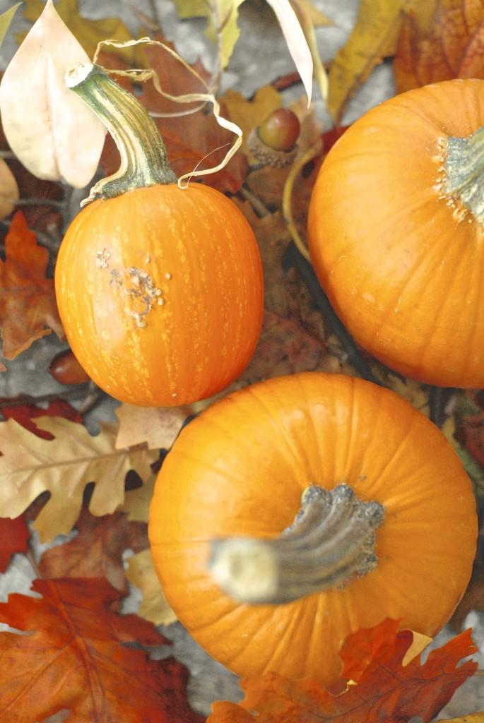 pumpkin cheesecake protein balls 3